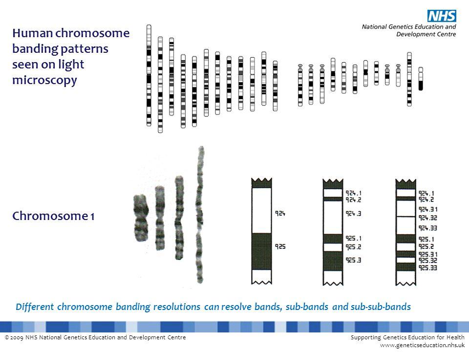© 2009 NHS National Genetics Education and Development CentreSupporting Genetics Education for Health www.geneticseducation.nhs.uk Different chromosom