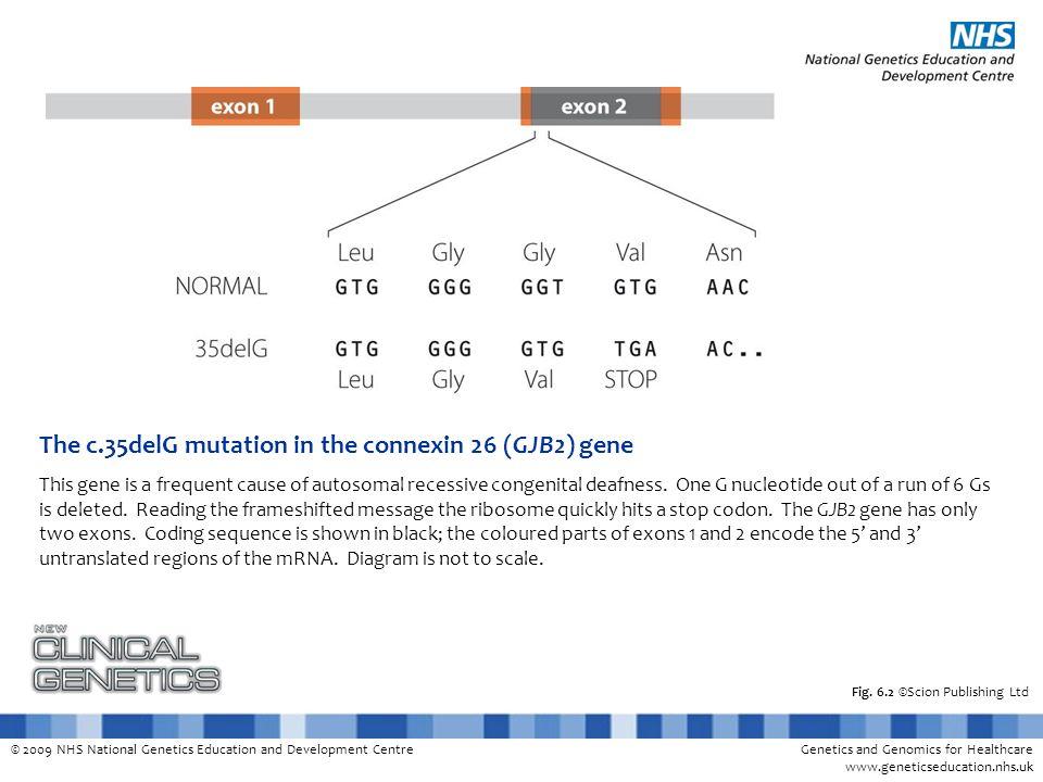 © 2009 NHS National Genetics Education and Development CentreGenetics and Genomics for Healthcare www.geneticseducation.nhs.uk Fig. 6.2 ©Scion Publish