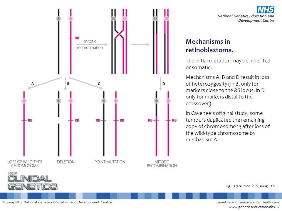 © 2009 NHS National Genetics Education and Development CentreGenetics and Genomics for Healthcare www.geneticseducation.nhs.uk Fig. 12.7 ©Scion Publis