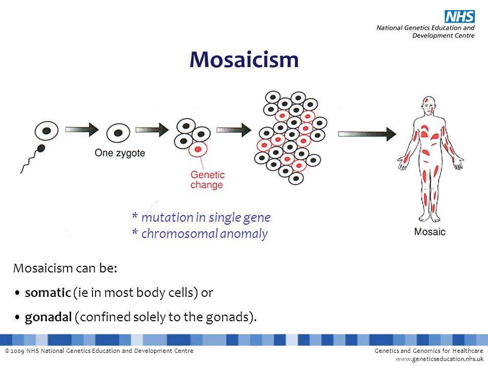 © 2009 NHS National Genetics Education and Development CentreGenetics and Genomics for Healthcare www.geneticseducation.nhs.uk Mosaicism * mutation in