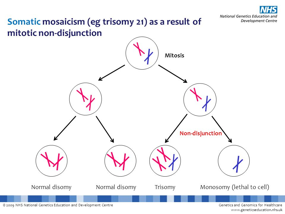 © 2009 NHS National Genetics Education and Development CentreGenetics and Genomics for Healthcare www.geneticseducation.nhs.uk Normal disomy Mitosis N