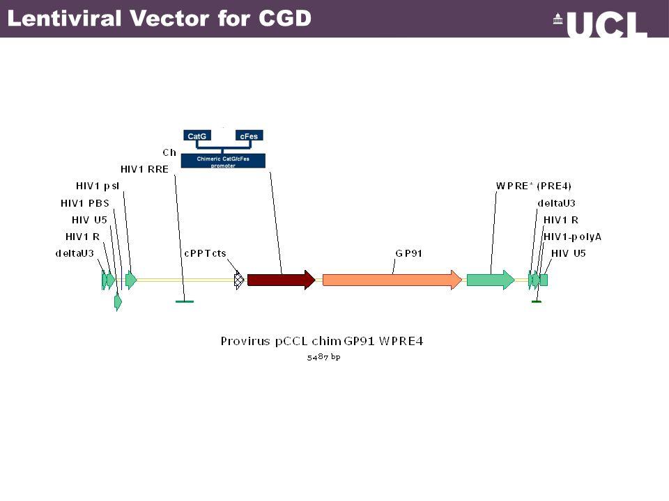 Lentiviral Vector for CGD