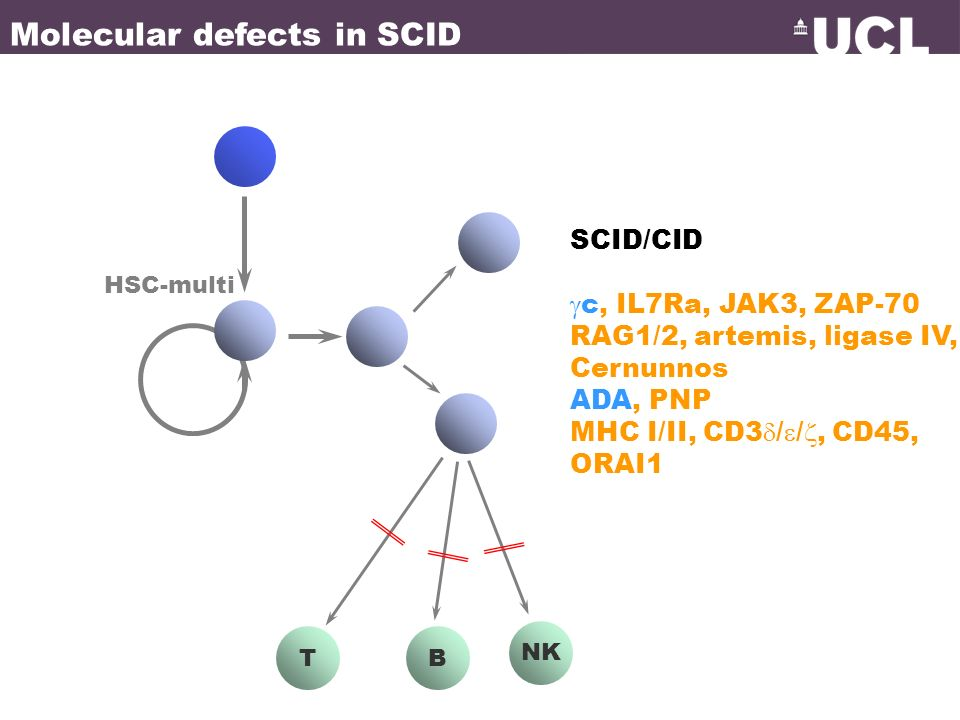 TB NK HSC-multi SCID/CID c, IL7Ra, JAK3, ZAP-70 RAG1/2, artemis, ligase IV, Cernunnos ADA, PNP MHC I/II, CD3 / /, CD45, ORAI1 Molecular defects in SCI
