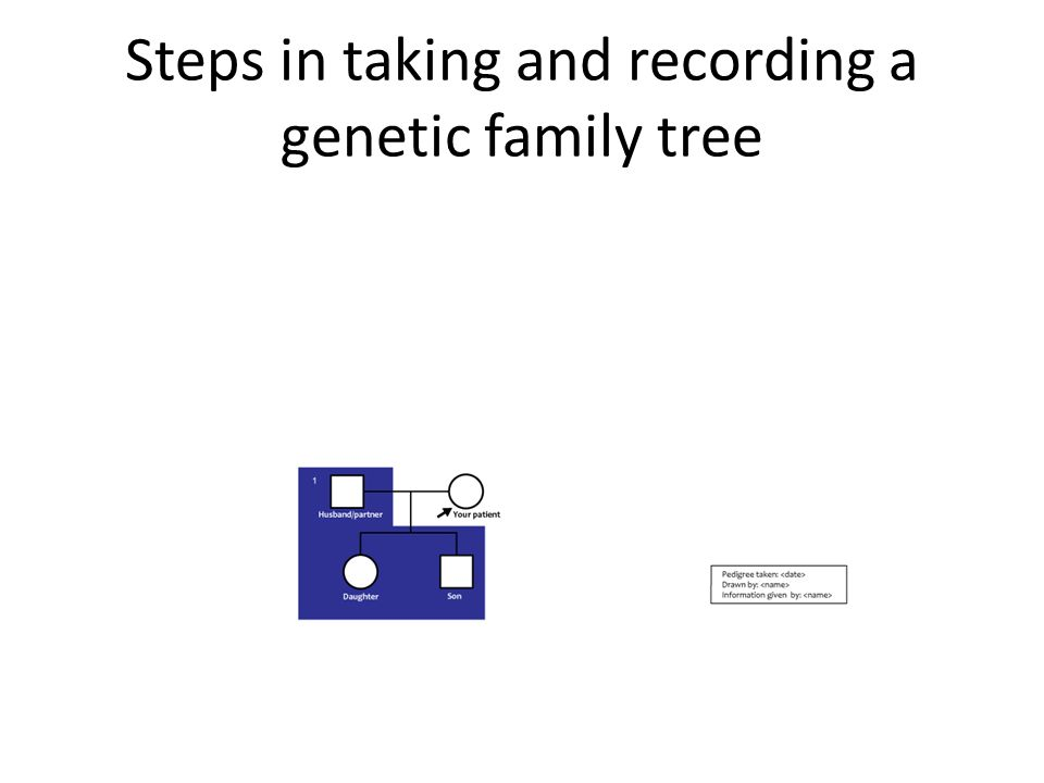 Steps in taking and recording a genetic family tree