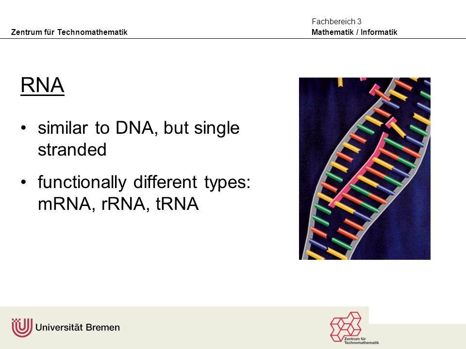 Zentrum für Technomathematik Mathematik / Informatik Fachbereich 3 RNA similar to DNA, but single stranded functionally different types: mRNA, rRNA, tRNA