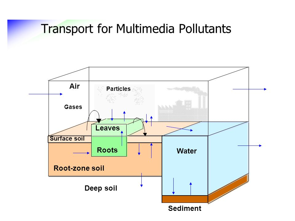 Transport for Multimedia Pollutants Water Sediment Surface soil Air Root-zone soil Roots Leaves Deep soil Gases Particles