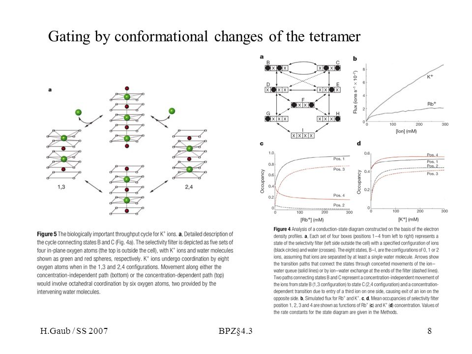 H.Gaub / SS 2007BPZ§4.38 Gating by conformational changes of the tetramer