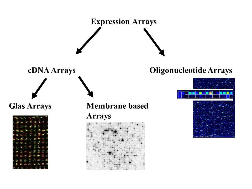 Expression Arrays cDNA ArraysOligonucleotide Arrays Glas ArraysMembrane based Arrays