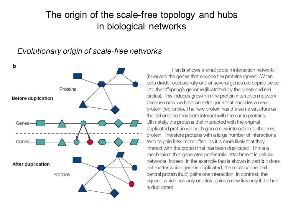 The origin of the scale-free topology and hubs in biological networks Evolutionary origin of scale-free networks