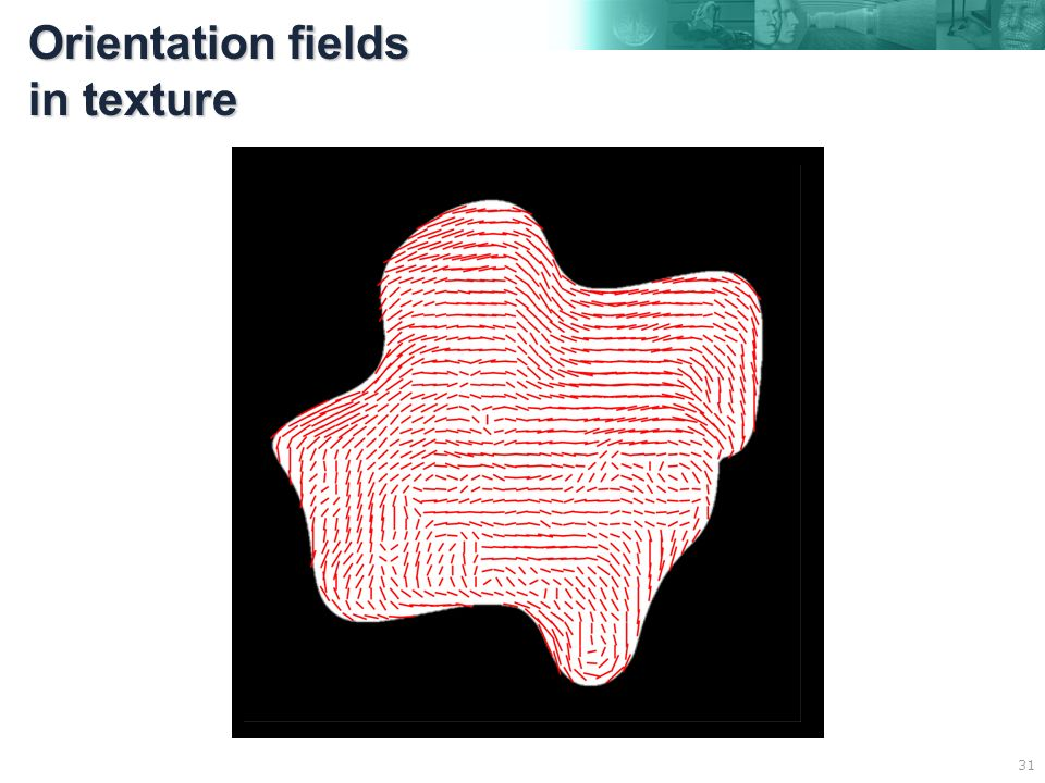 31 Orientation fields in texture