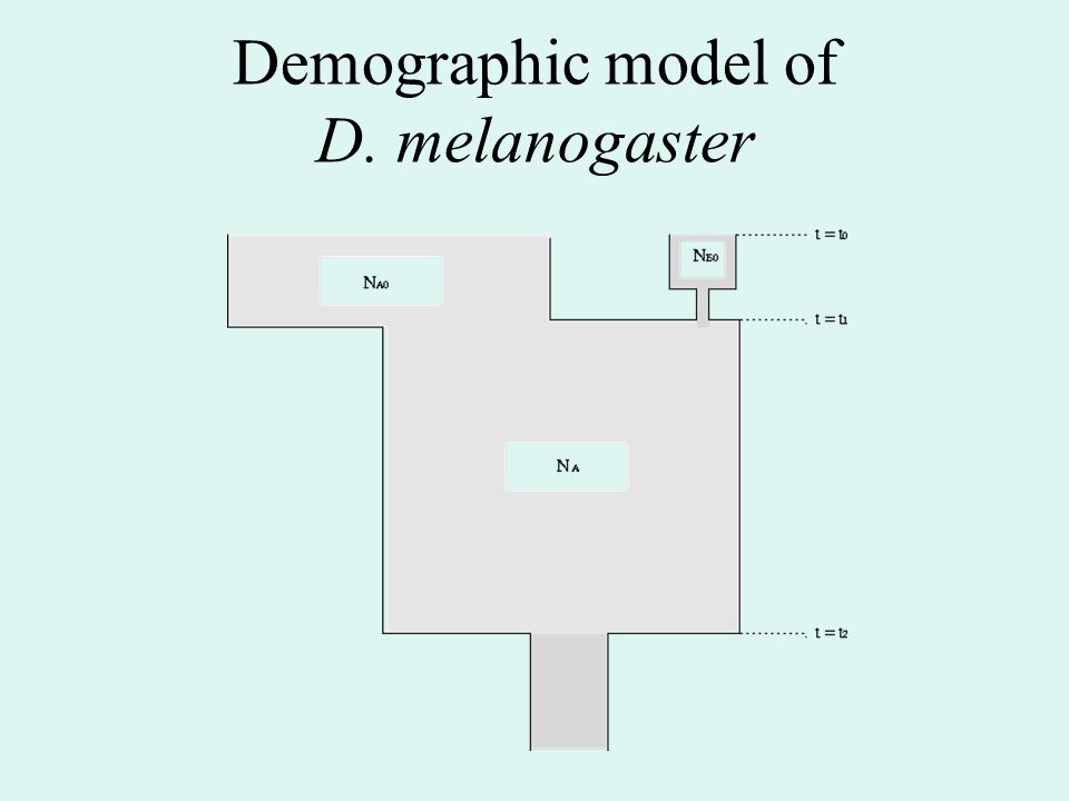 Demographic model of D. melanogaster