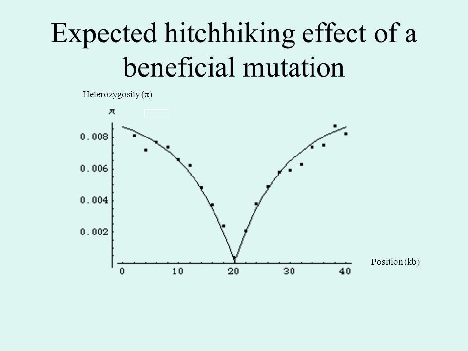 Expected hitchhiking effect of a beneficial mutation Position (kb) Heterozygosity