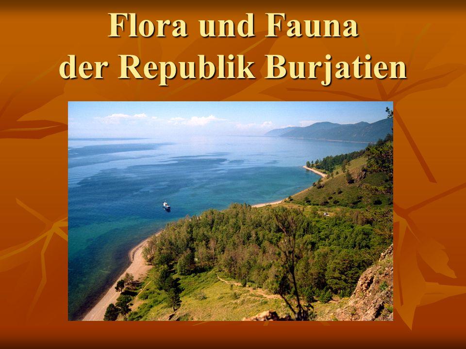 Flora und Fauna der Republik Burjatien