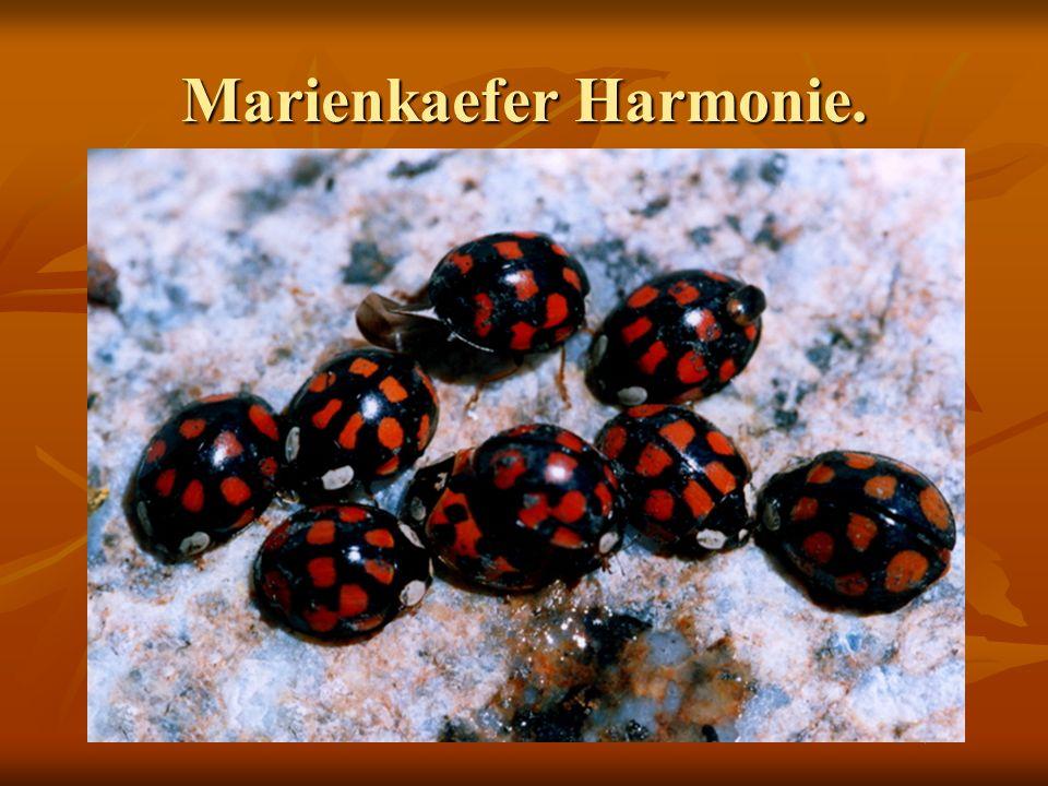 Marienkaefer Harmonie.