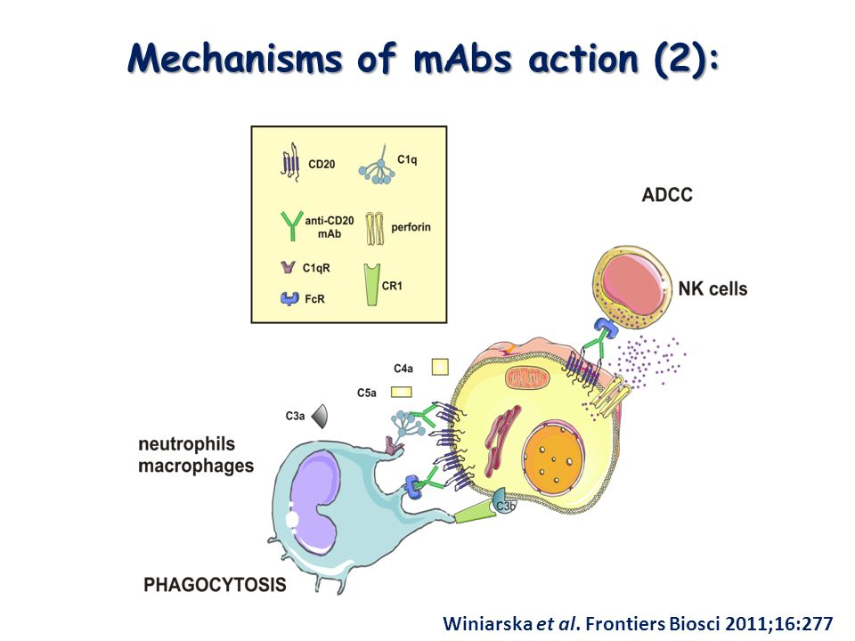Mechanisms of mAbs action (2): Winiarska et al. Frontiers Biosci 2011;16:277