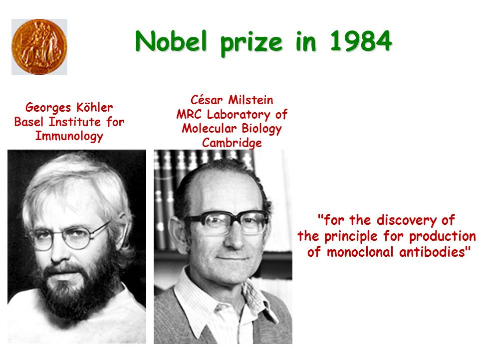 Georges Köhler Basel Institute for Immunology César Milstein MRC Laboratory of Molecular Biology Cambridge Nobel prize in 1984 for the discovery of the principle for production of monoclonal antibodies