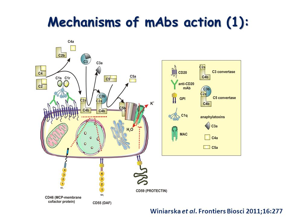 Mechanisms of mAbs action (1): Winiarska et al. Frontiers Biosci 2011;16:277