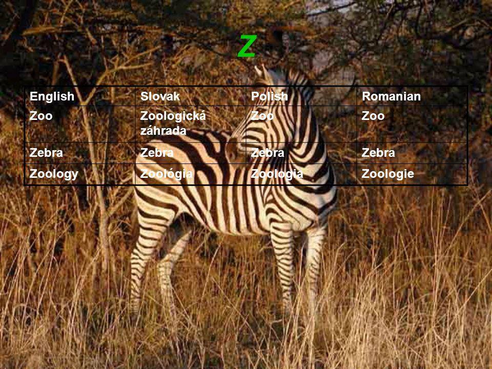 Z EnglishSlovakPolishRomanian ZooZoologická záhrada Zoo Zebra ZoologyZoológiaZoologiaZoologie