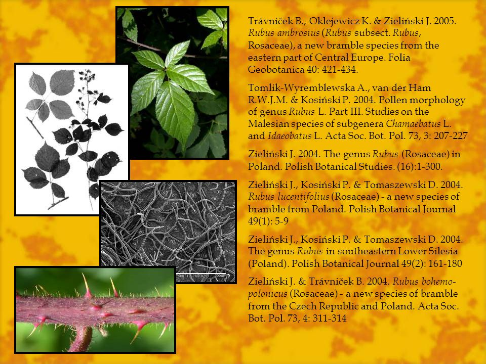 Trávniček B., Oklejewicz K. & Zieliński J. 2005. Rubus ambrosius ( Rubus subsect. Rubus, Rosaceae), a new bramble species from the eastern part of Cen