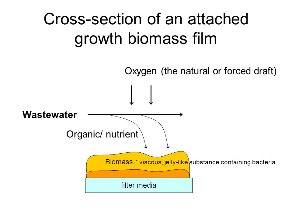 Cross-section of an attached growth biomass film Wastewater Oxygen (the natural or forced draft) Organic/ nutrient filter media Biomass : viscous, jel