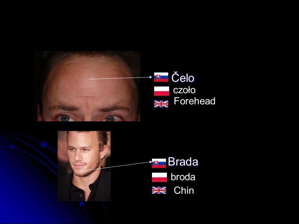 Čelo Čelo Brada Brada czoło broda Forehead Chin