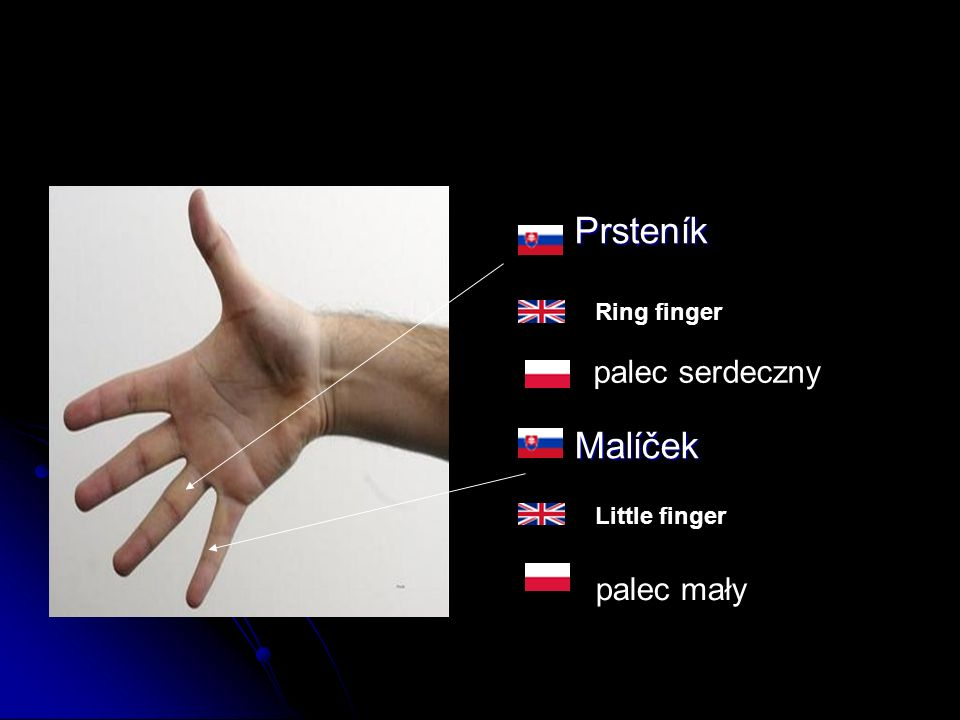 Prsteník Prsteník Malíček Malíček Ring finger Little finger palec serdeczny palec mały