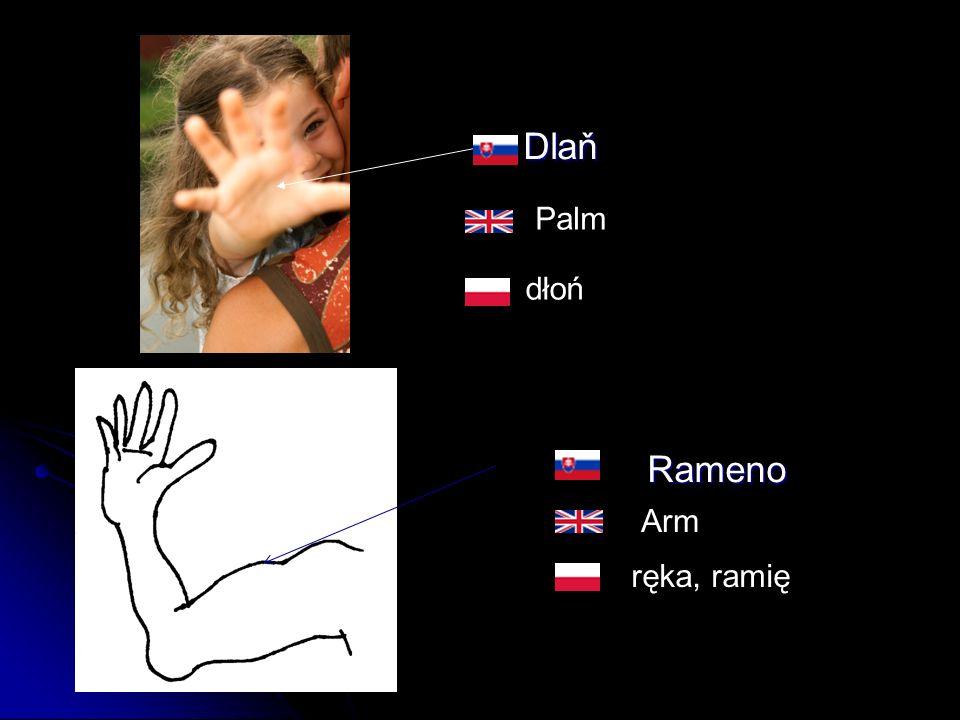 Dlaň Dlaň Rameno Rameno dłoń ręka, ramię Palm Arm