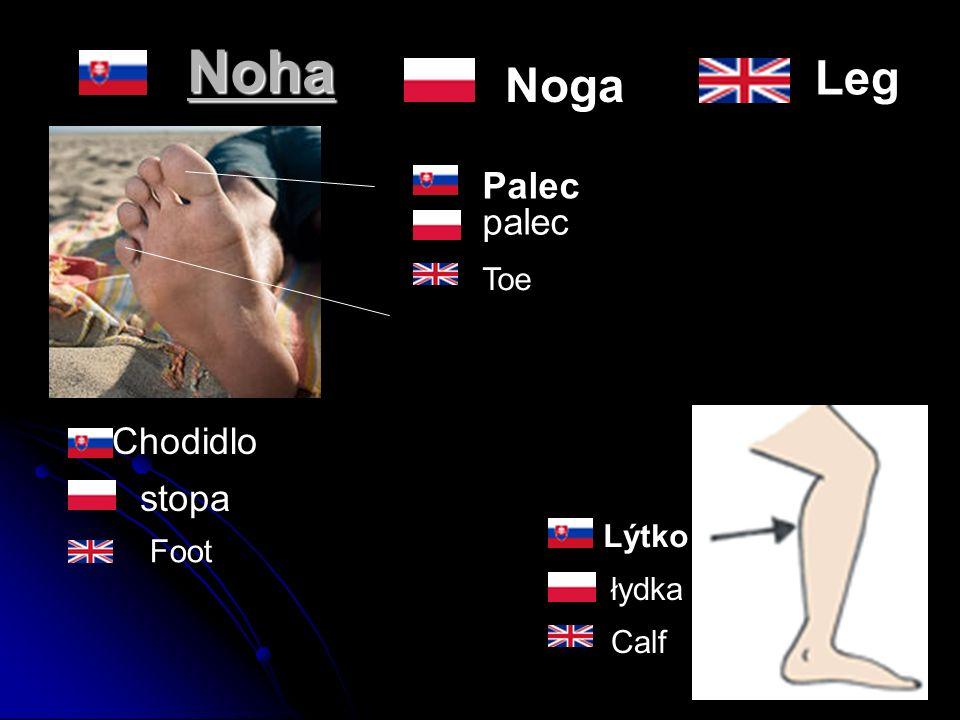 Noha Chodidlo Palec Lýtko Toe stopa łydka Calf Foot Noga palec Leg