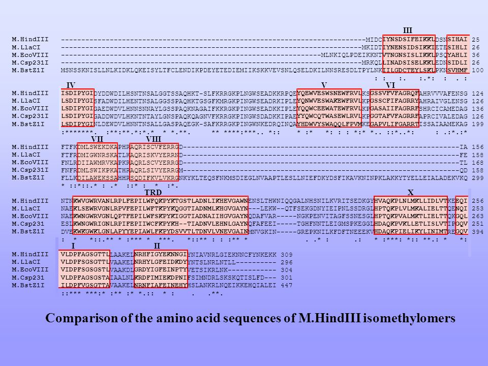 Comparison of the amino acid sequences of M.HindIII isomethylomers