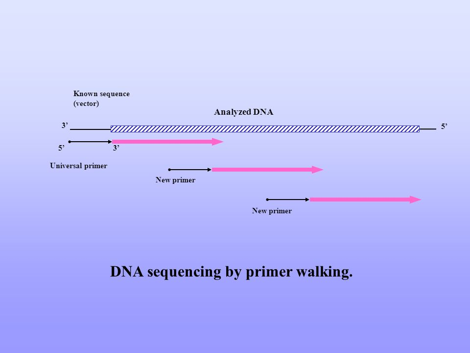 DNA sequencing by primer walking.