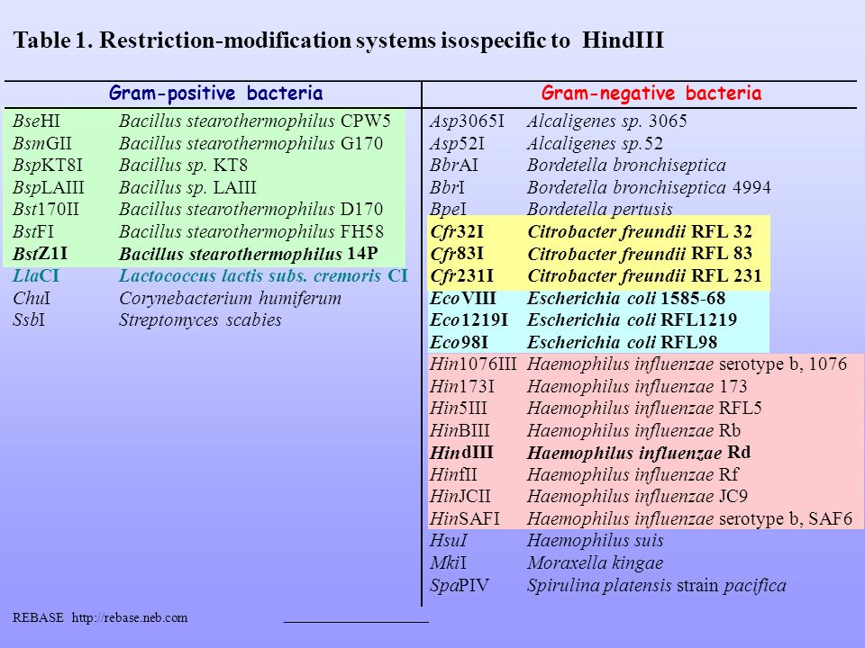 Table 1. Restriction-modification systems isospecific to HindIII Gram-positive bacteriaGram-negative bacteria BseHIBacillus stearothermophilusCPW5 Asp