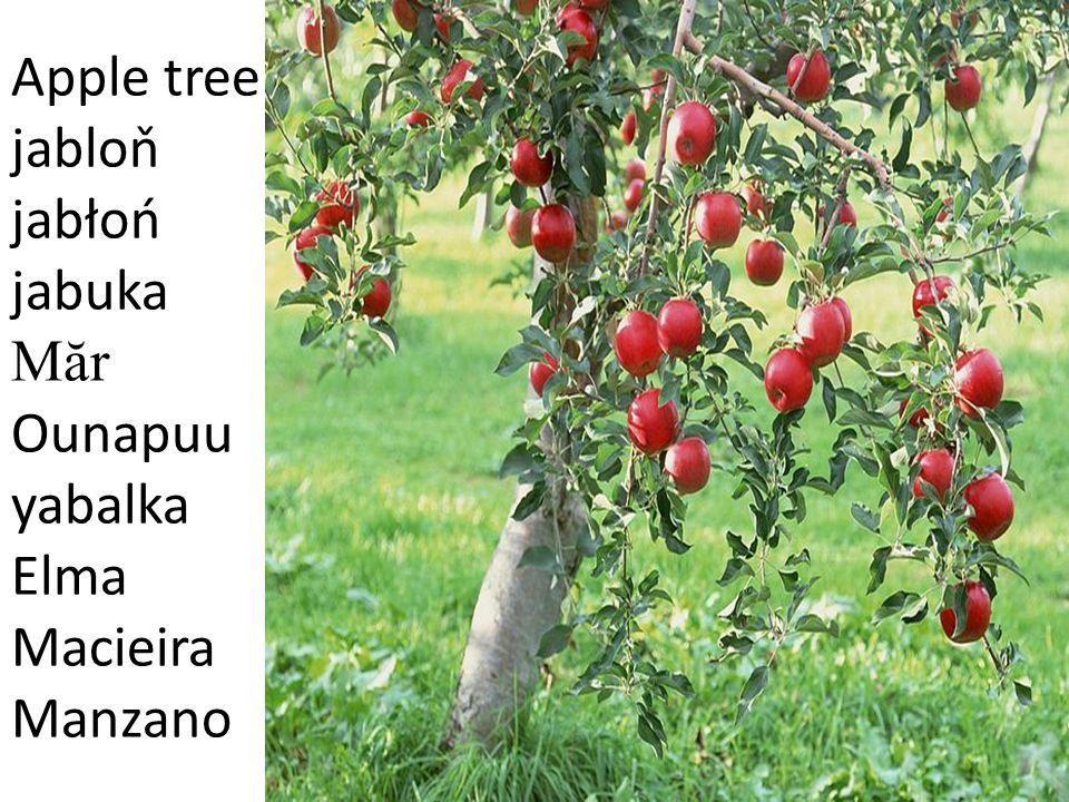 Pear tree hrušeň grusza kruška P ă r pirnipuu krusha Armut Pereira Peral