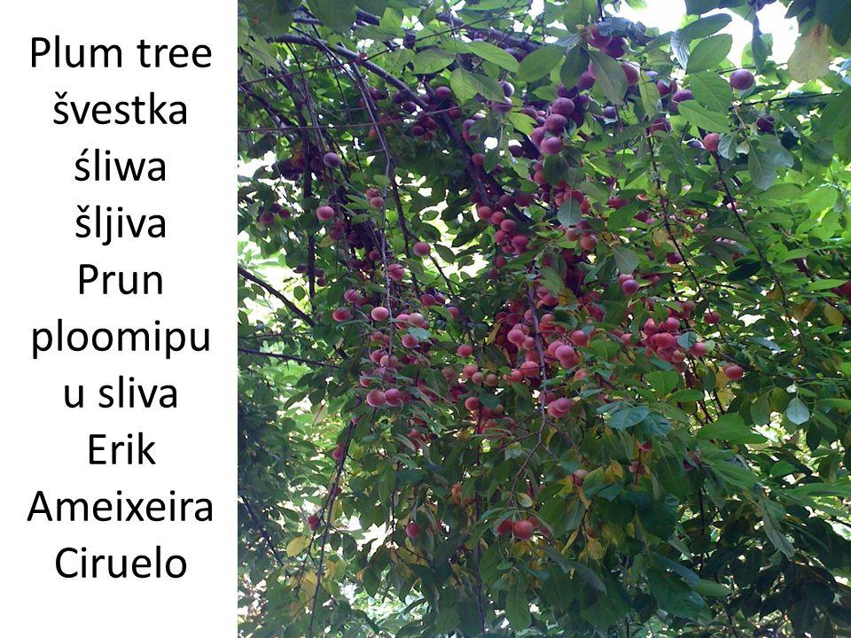 Tree strom drzewo drvo Copac puu darvo Ağaç árvore arbol