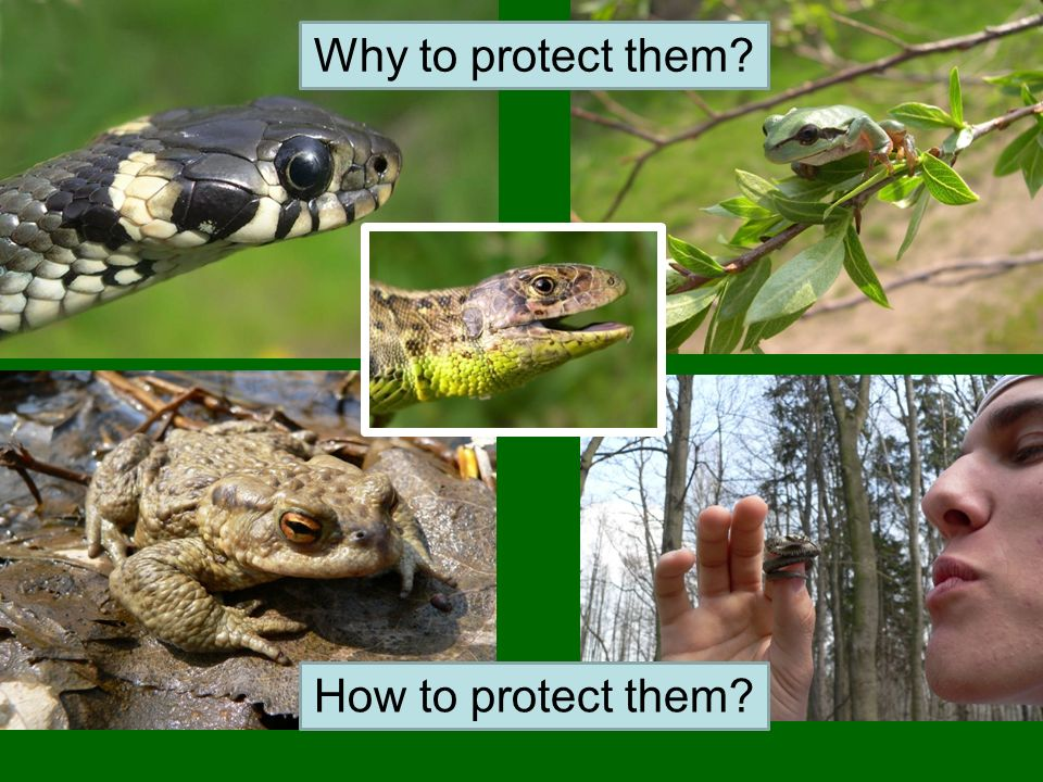 Why to protect them? How to protect them?