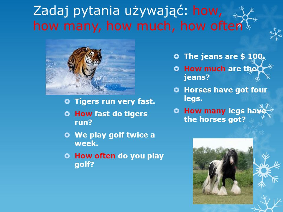 Zadaj pytania używająć: how, how many, how much, how often Tigers run very fast.