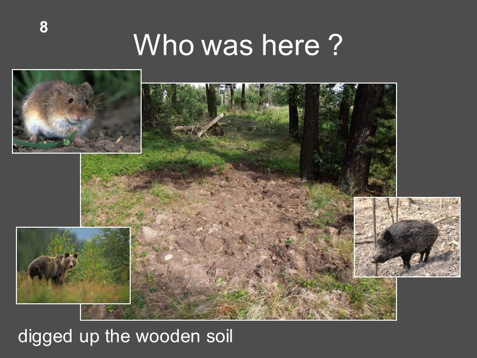 Who was here digged up the wooden soil 8
