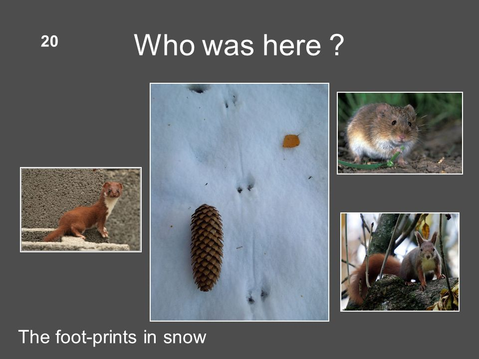 Who was here 20 The foot-prints in snow