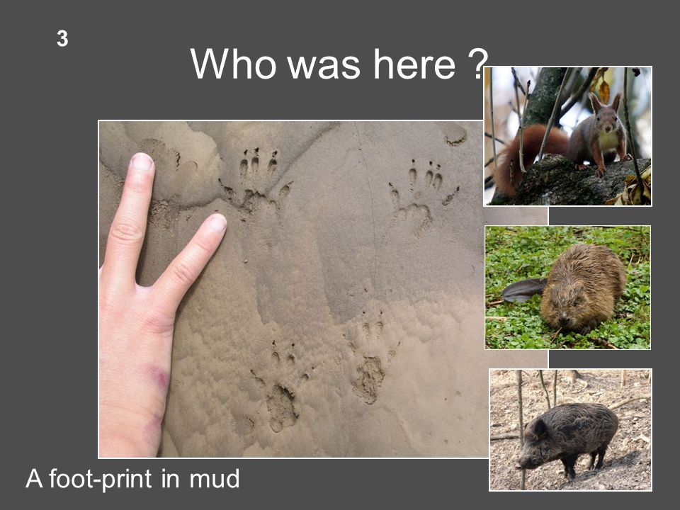 Who was here A foot-print in mud 3