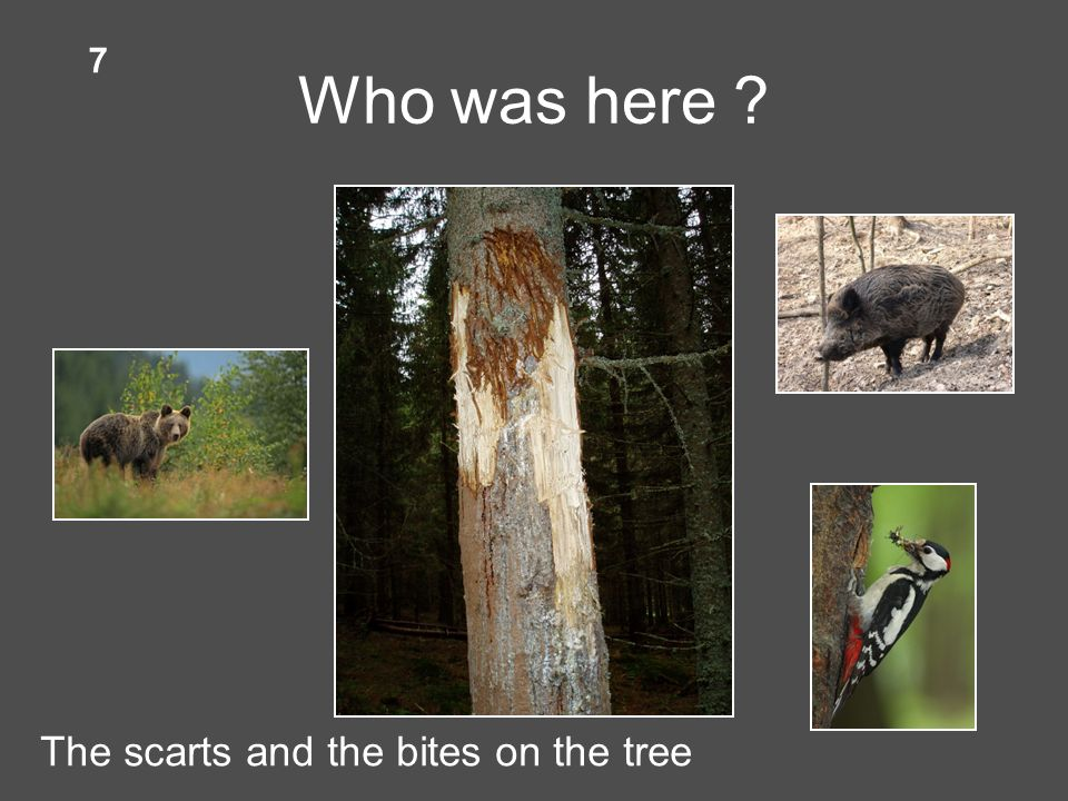 Who was here The scarts and the bites on the tree 7