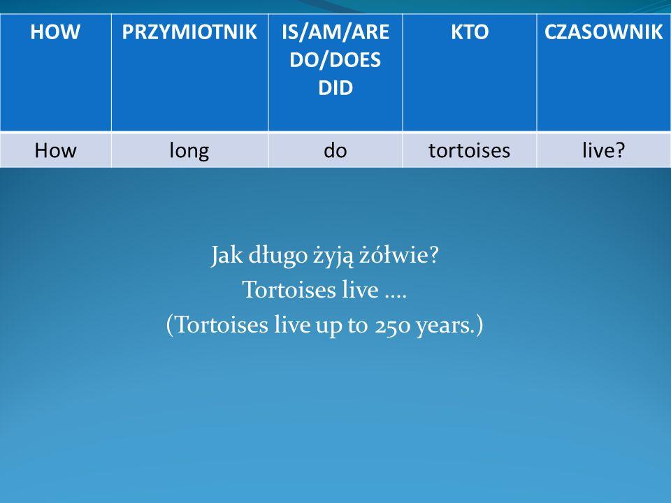 Jak długo żyją żółwie? Tortoises live …. (Tortoises live up to 250 years.) HOWPRZYMIOTNIKIS/AM/ARE DO/DOES DID KTOCZASOWNIK Howlongdotortoiseslive?