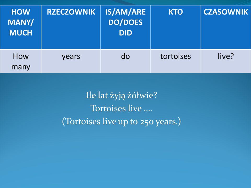 Ile lat żyją żółwie? Tortoises live …. (Tortoises live up to 250 years.) HOW MANY/ MUCH RZECZOWNIKIS/AM/ARE DO/DOES DID KTOCZASOWNIK How many yearsdot