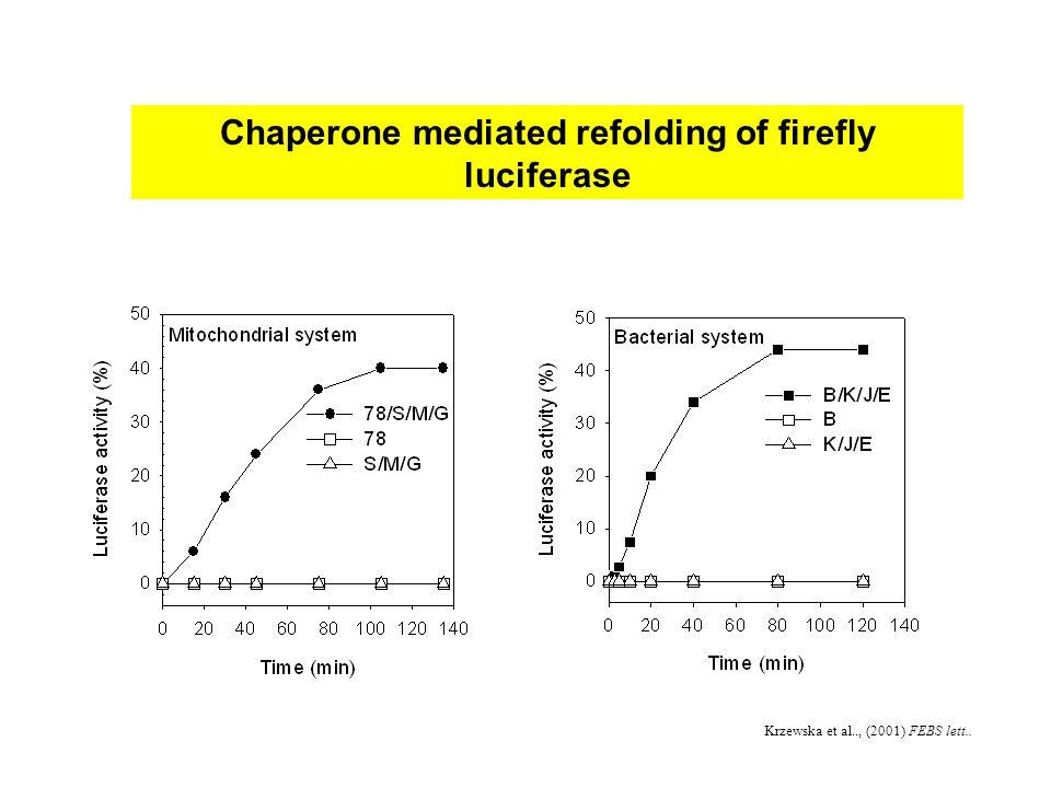 Chaperone mediated refolding of firefly luciferase Krzewska et al.., (2001) FEBS lett..