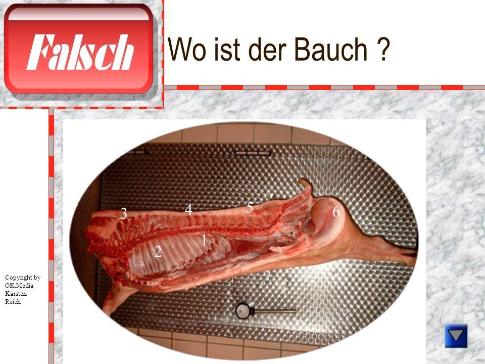 Wo ist der Bauch ? 1 2 3 4 5 6 Copyright by OK.Media Karsten Reich