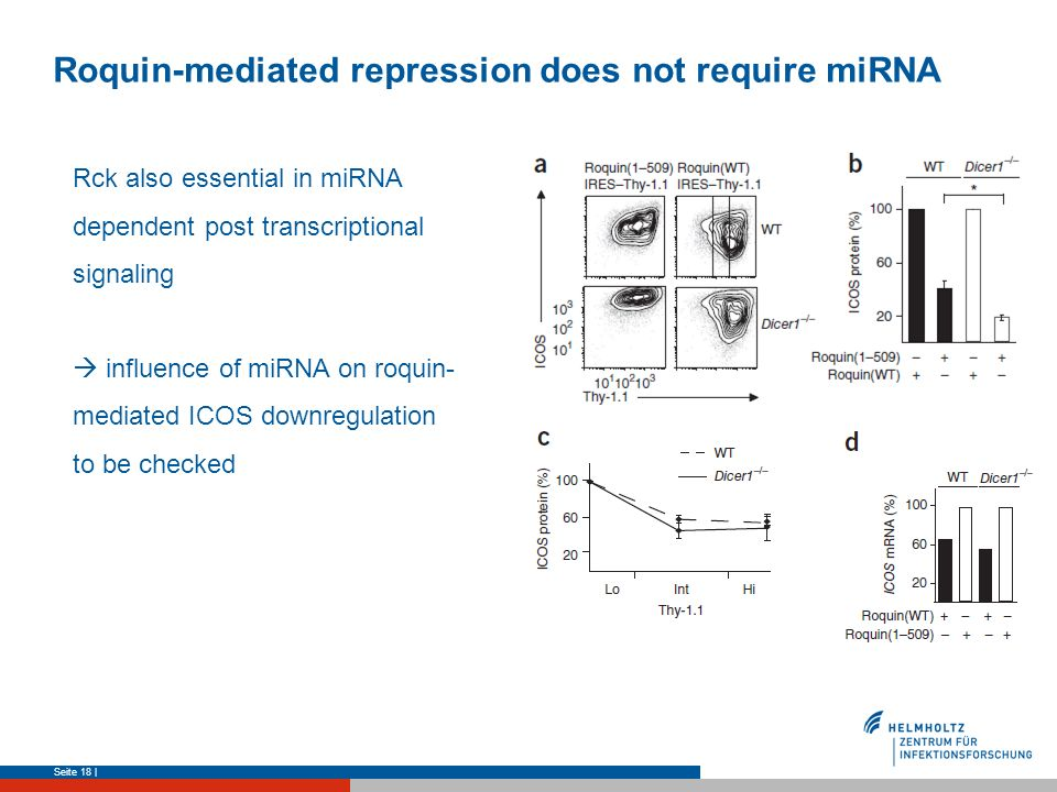 Roquin-mediated repression does not require miRNA Seite 18 | Rck also essential in miRNA dependent post transcriptional signaling influence of miRNA o