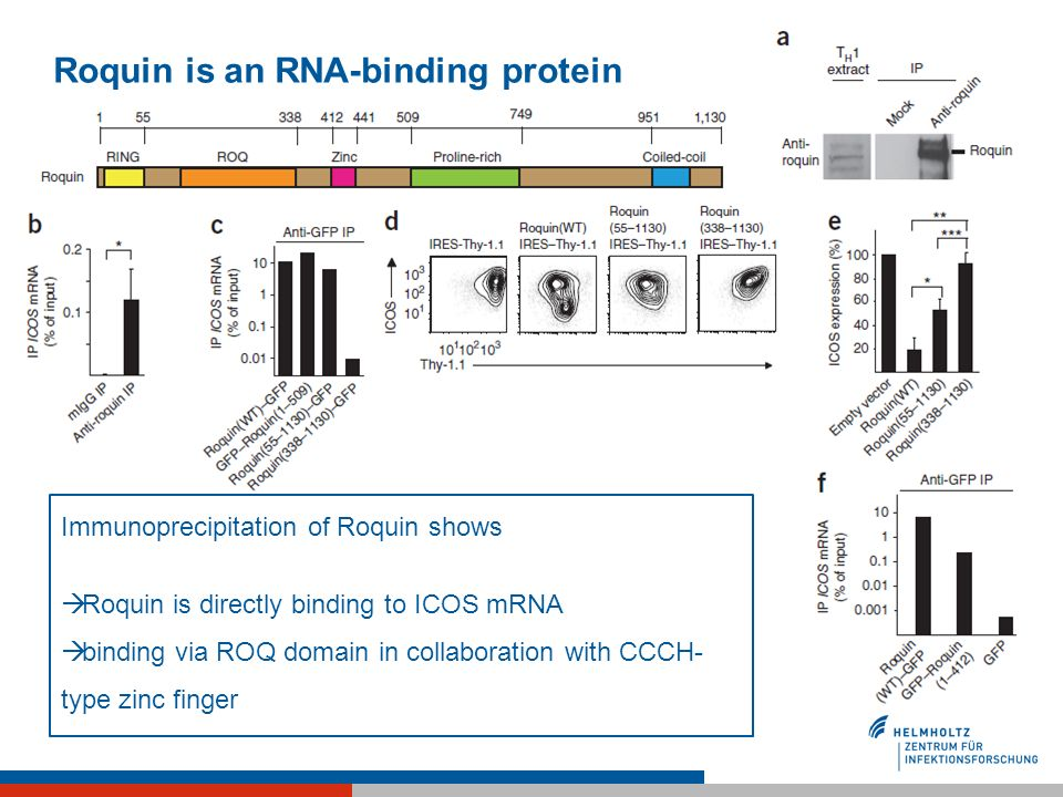 Roquin is an RNA-binding protein Immunoprecipitation of Roquin shows Roquin is directly binding to ICOS mRNA binding via ROQ domain in collaboration w