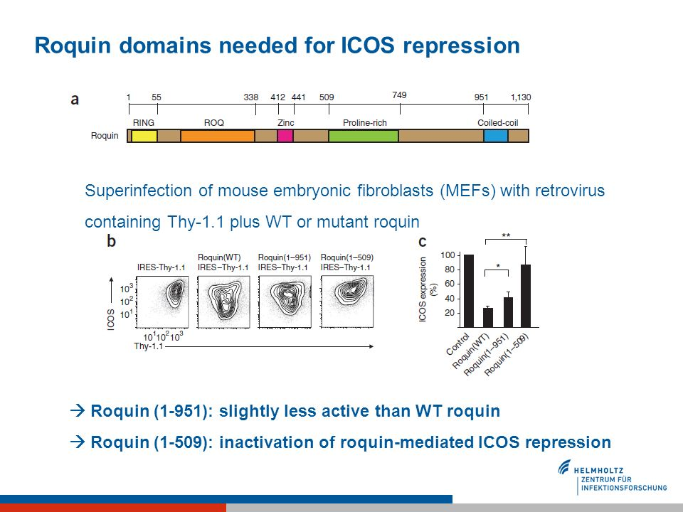 Roquin domains needed for ICOS repression Seite 9 | Roquin (1-951): slightly less active than WT roquin Roquin (1-509): inactivation of roquin-mediate