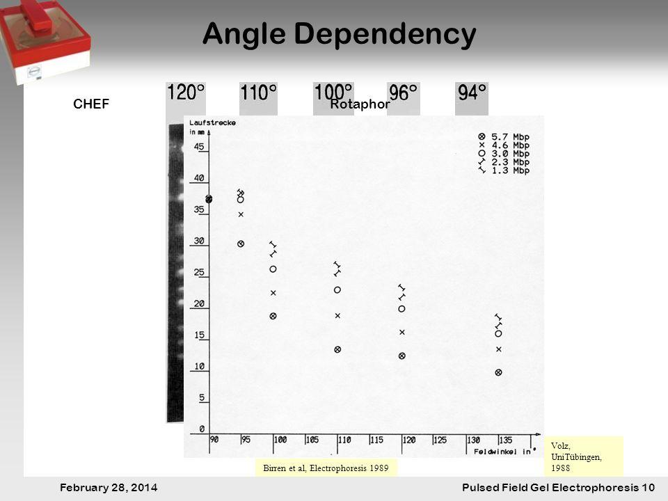28. Februar 2014 Pulsfeldgelelektrophorese.10 February 28, 2014 Pulsed Field Gel Electrophoresis 10 Angle Dependency Birren et al, Electrophoresis 198