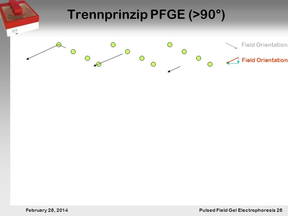 28. Februar 2014 Pulsfeldgelelektrophorese.26 February 28, 2014 Pulsed Field Gel Electrophoresis 26 Trennprinzip PFGE (>90°) Field Orientation