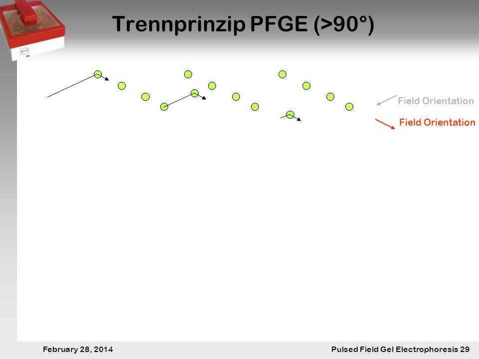 28. Februar 2014 Pulsfeldgelelektrophorese.29 February 28, 2014 Pulsed Field Gel Electrophoresis 29 Trennprinzip PFGE (>90°) Field Orientation