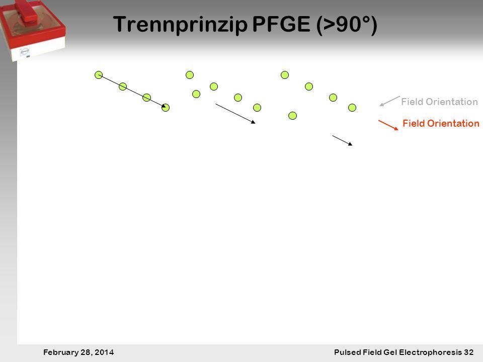 28. Februar 2014 Pulsfeldgelelektrophorese.32 February 28, 2014 Pulsed Field Gel Electrophoresis 32 Trennprinzip PFGE (>90°) Field Orientation